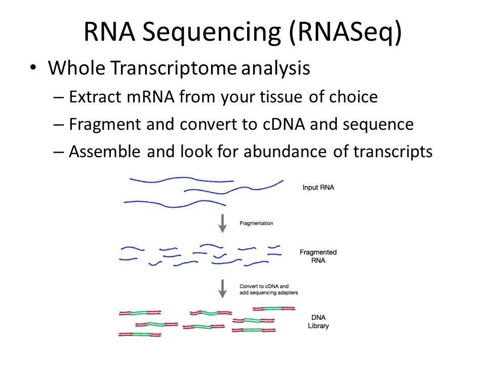 RNA Sequencing (RNASeq)