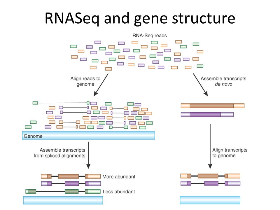 RNASeq and gene structure