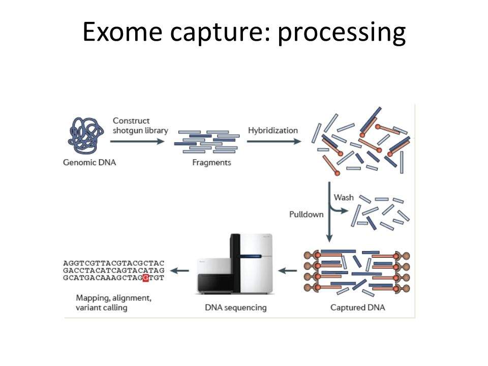 Exome capture: processing