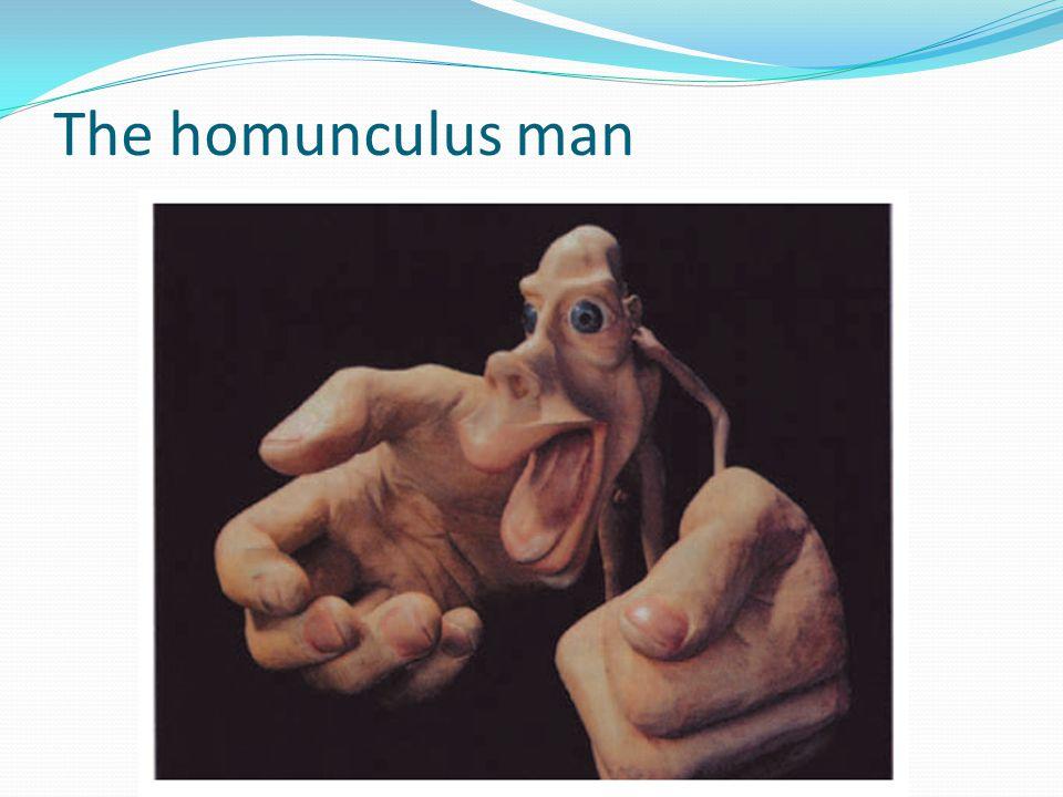 The homunculus man