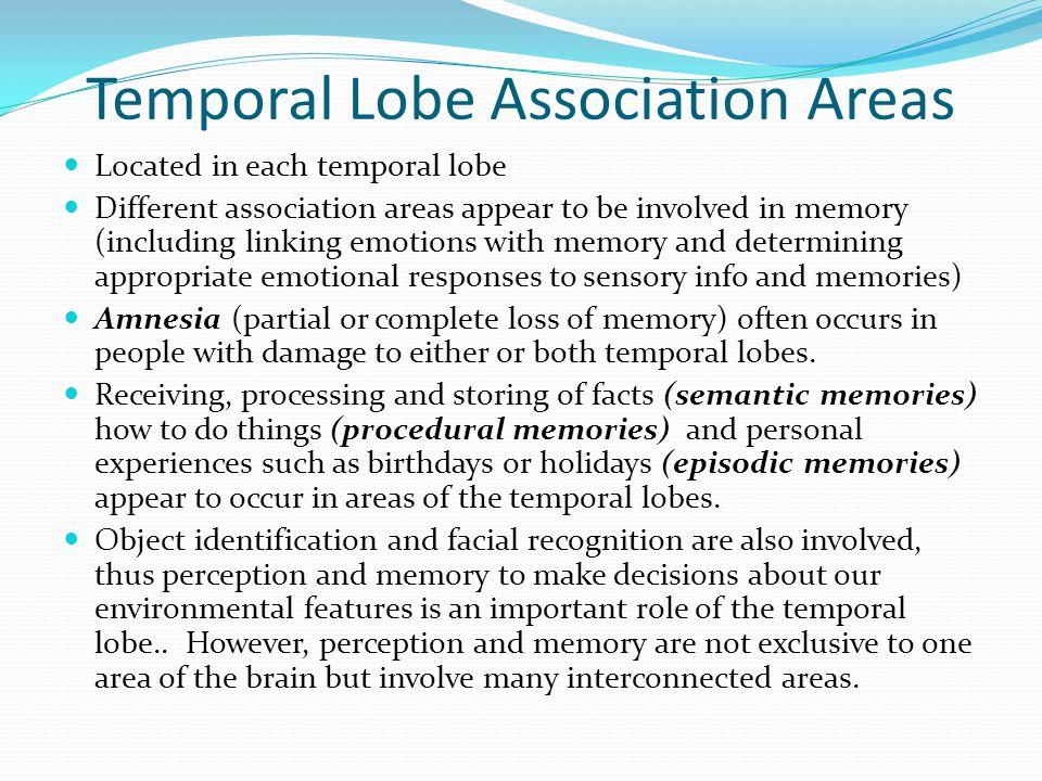 Temporal Lobe Association Areas