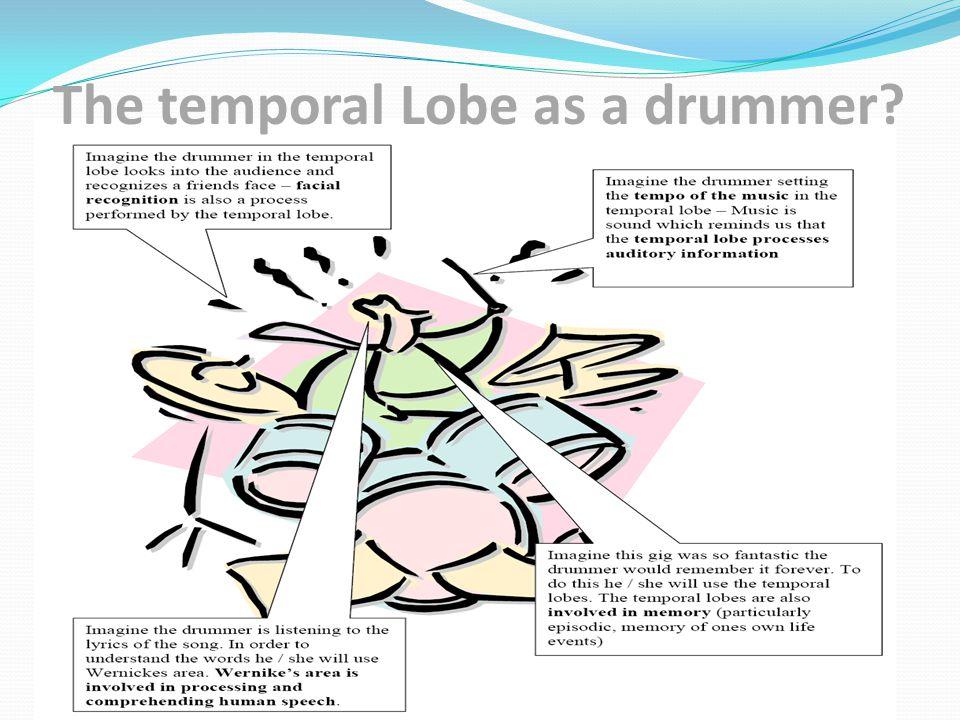 The temporal Lobe as a drummer