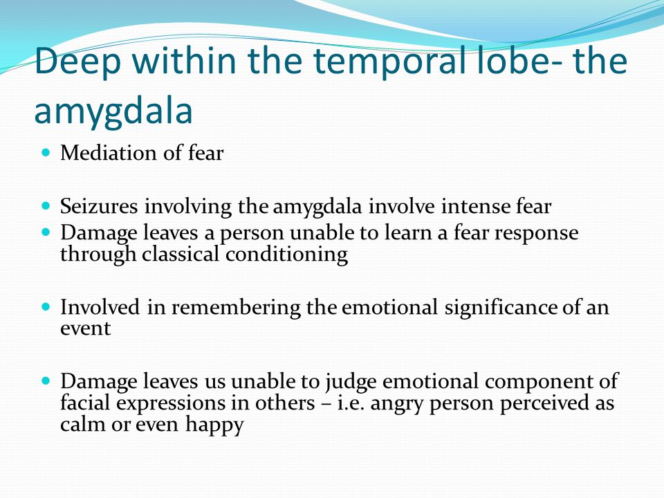 Deep within the temporal lobe- the amygdala