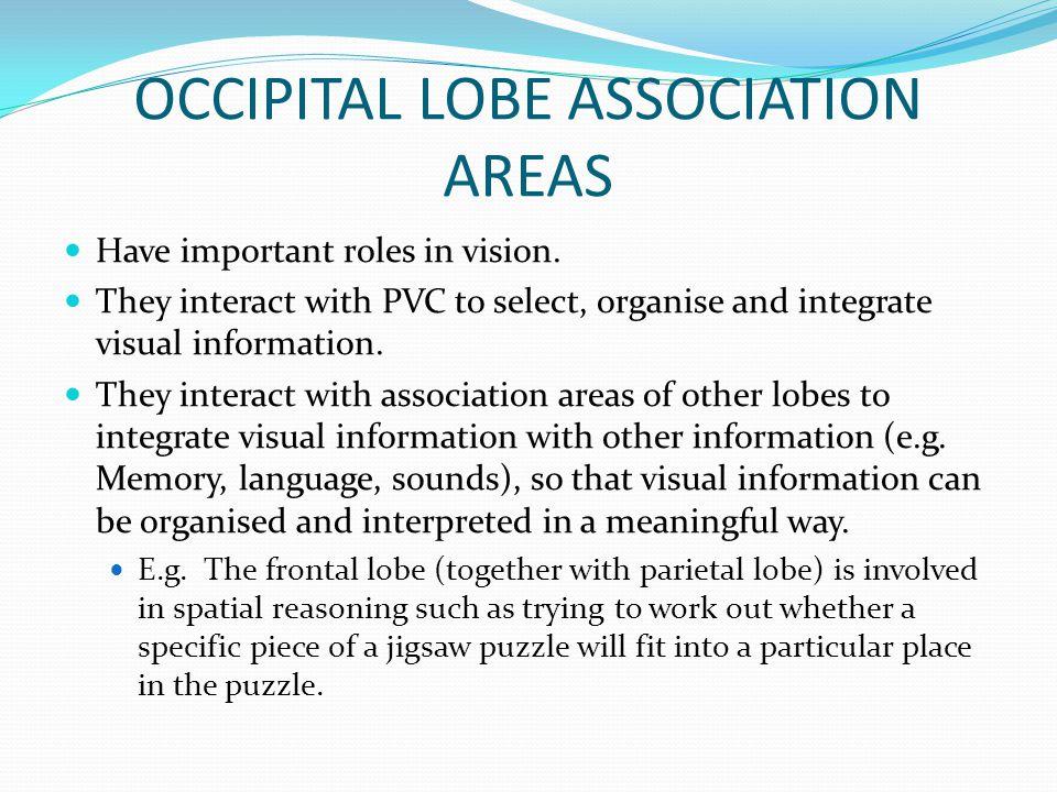 OCCIPITAL LOBE ASSOCIATION AREAS