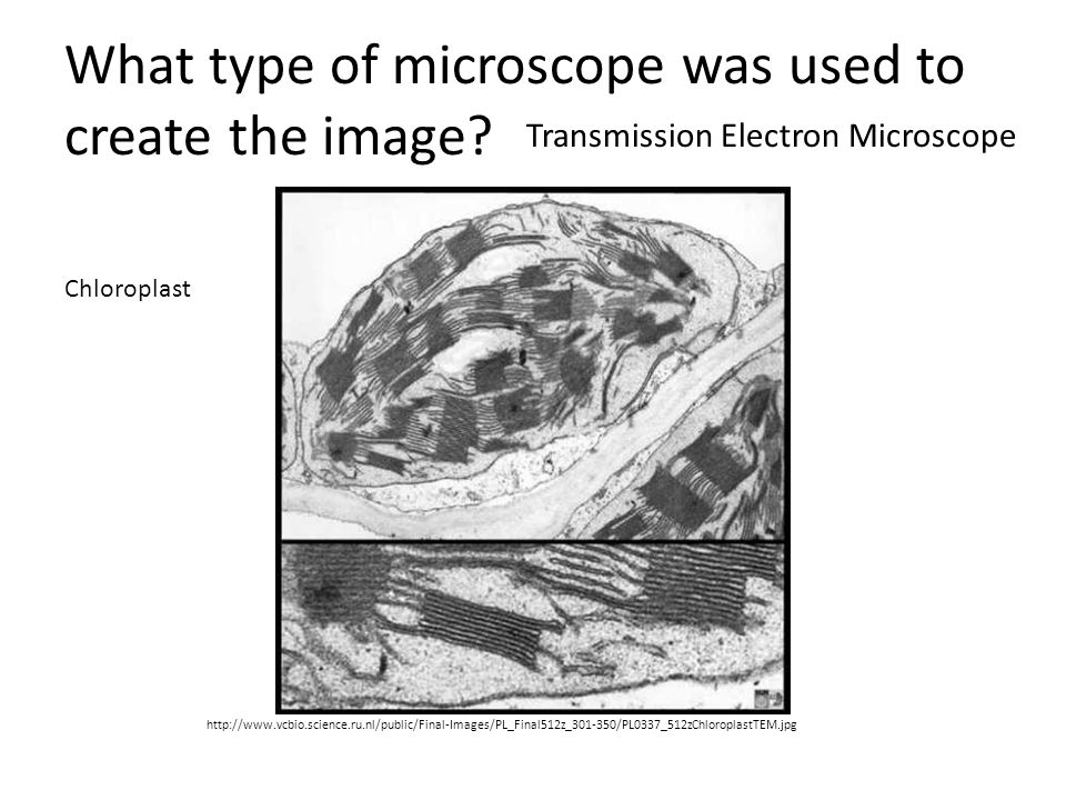 What type of microscope was used to create the image