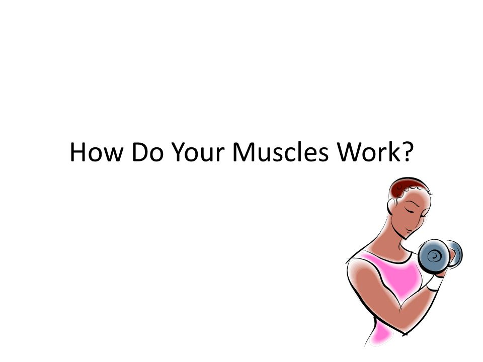 How Do Your Muscles Work