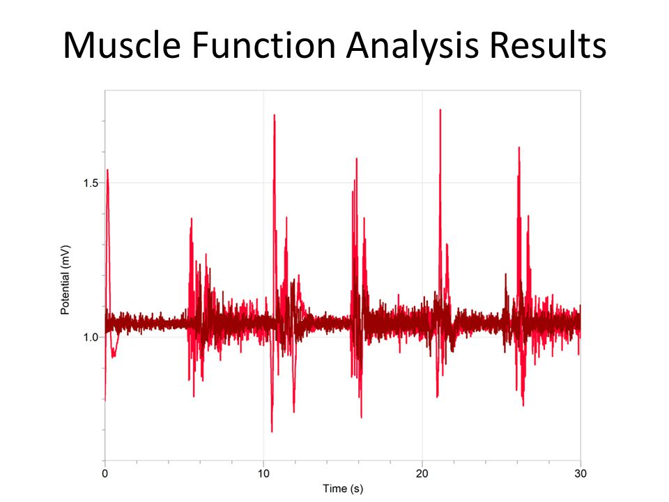 Muscle Function Analysis Results