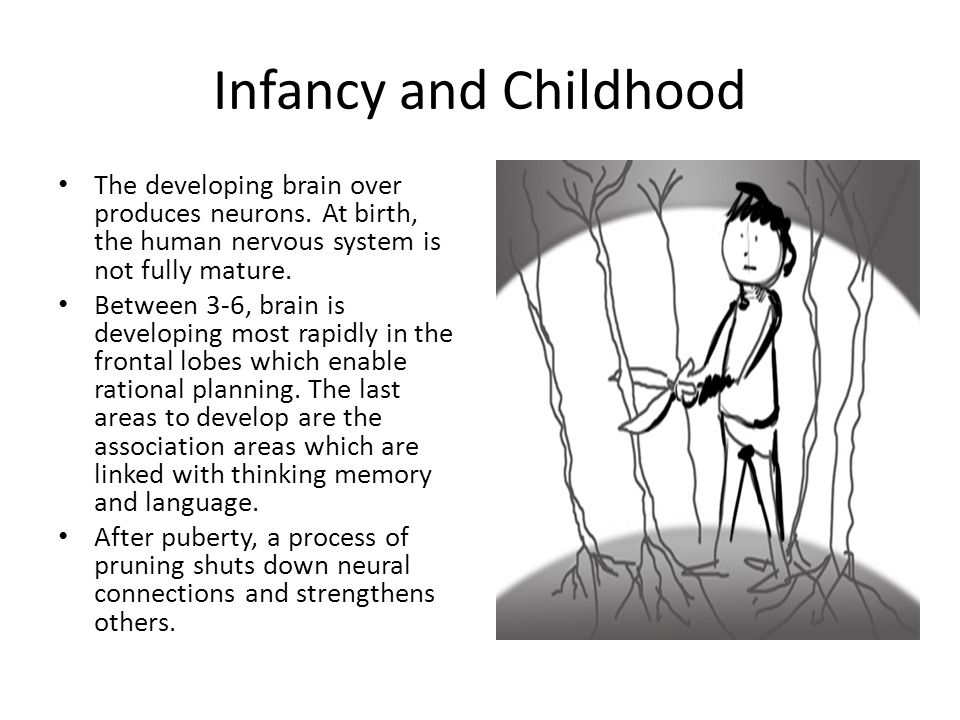 Infancy and Childhood The developing brain over produces neurons. At birth, the human nervous system is not fully mature.