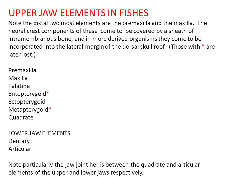 UPPER JAW ELEMENTS IN FISHES