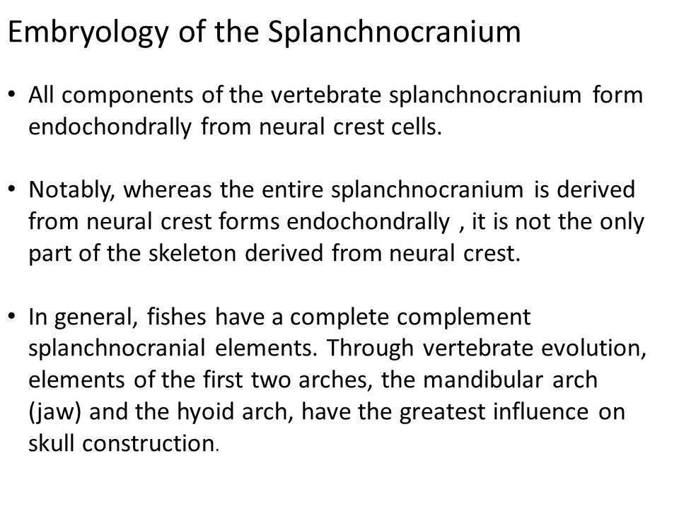Embryology of the Splanchnocranium