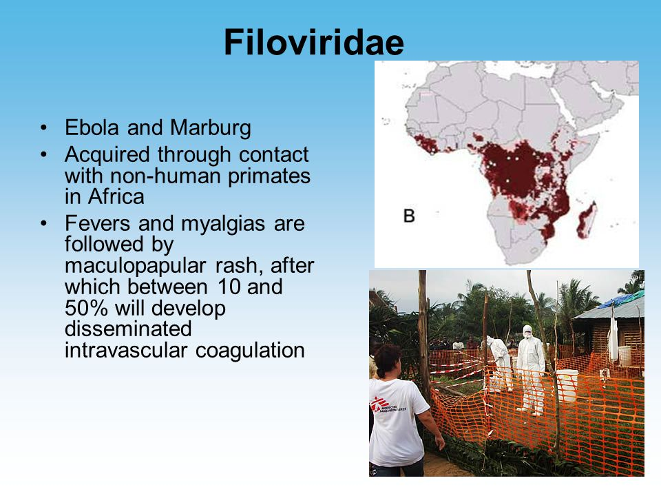 Filoviridae Ebola and Marburg