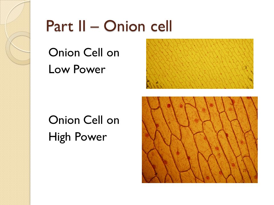 Part II – Onion cell Onion Cell on Low Power High Power