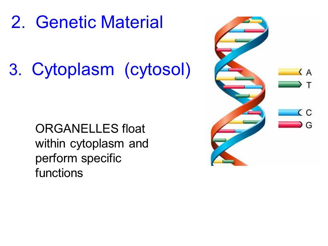 2. Genetic Material 3. Cytoplasm (cytosol)