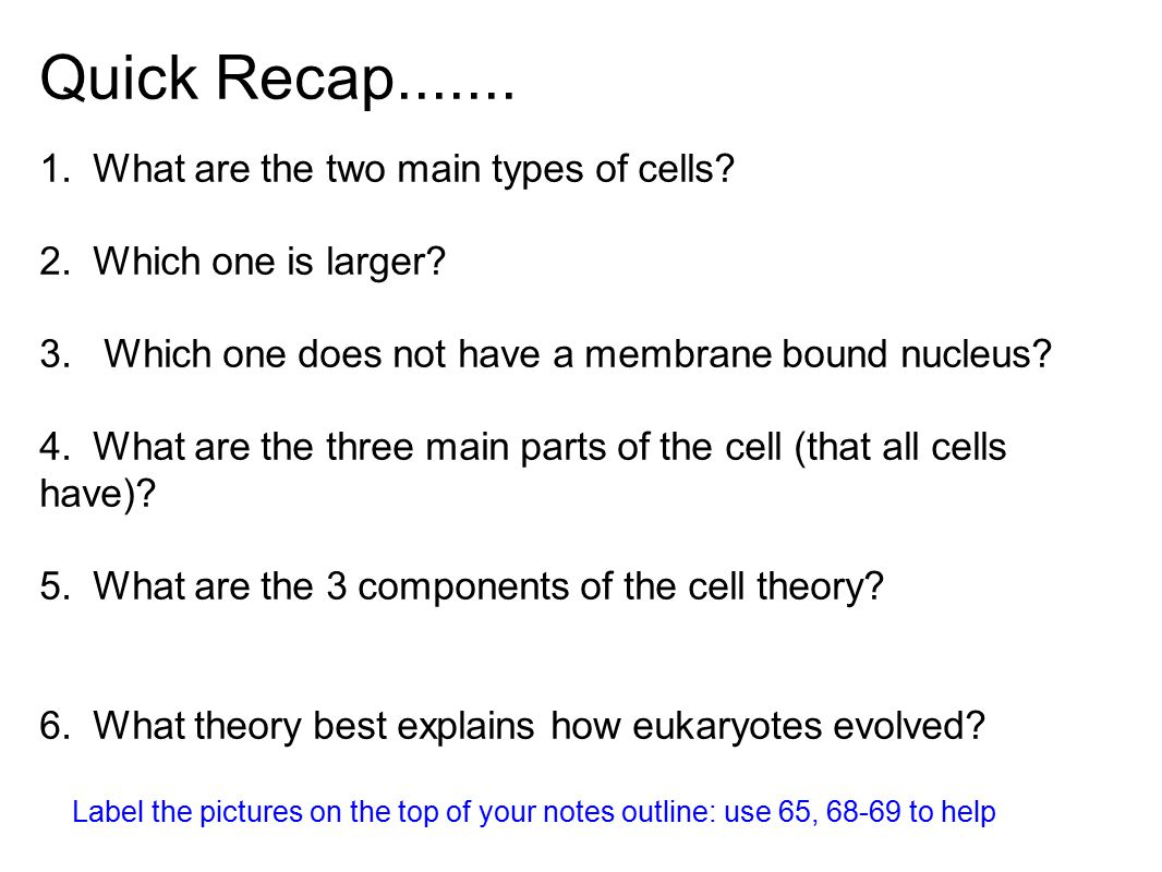 Quick Recap....... 1. What are the two main types of cells