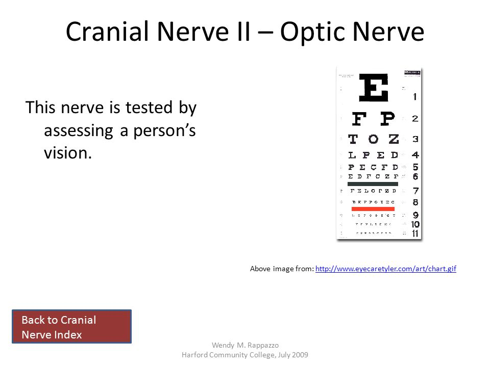 Cranial Nerve II – Optic Nerve