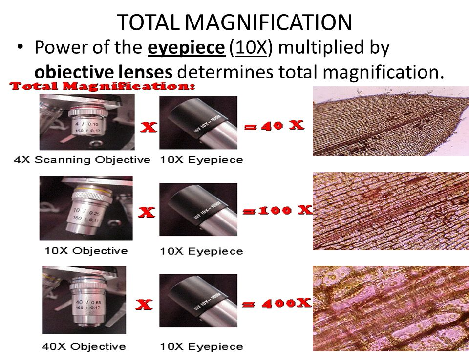 TOTAL MAGNIFICATION Power of the eyepiece (10X) multiplied by objective lenses determines total magnification.