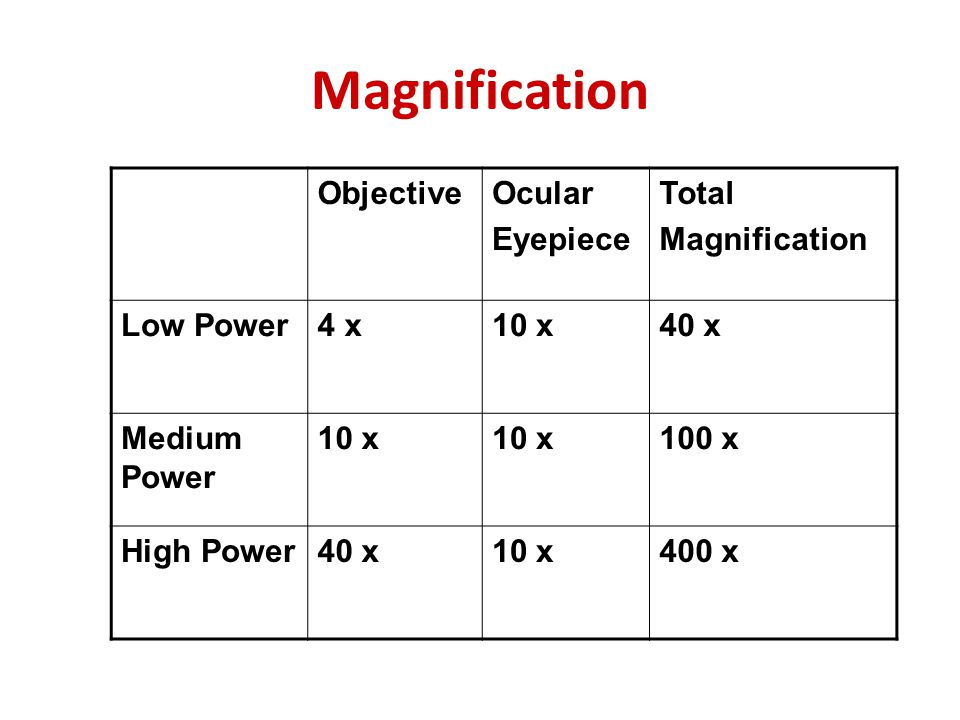 Magnification Objective Ocular Eyepiece Total Magnification Low Power