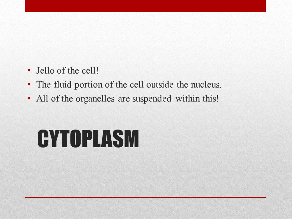 CYTOPLASM Jello of the cell!