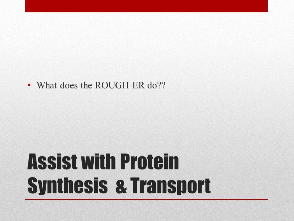 Assist with Protein Synthesis & Transport