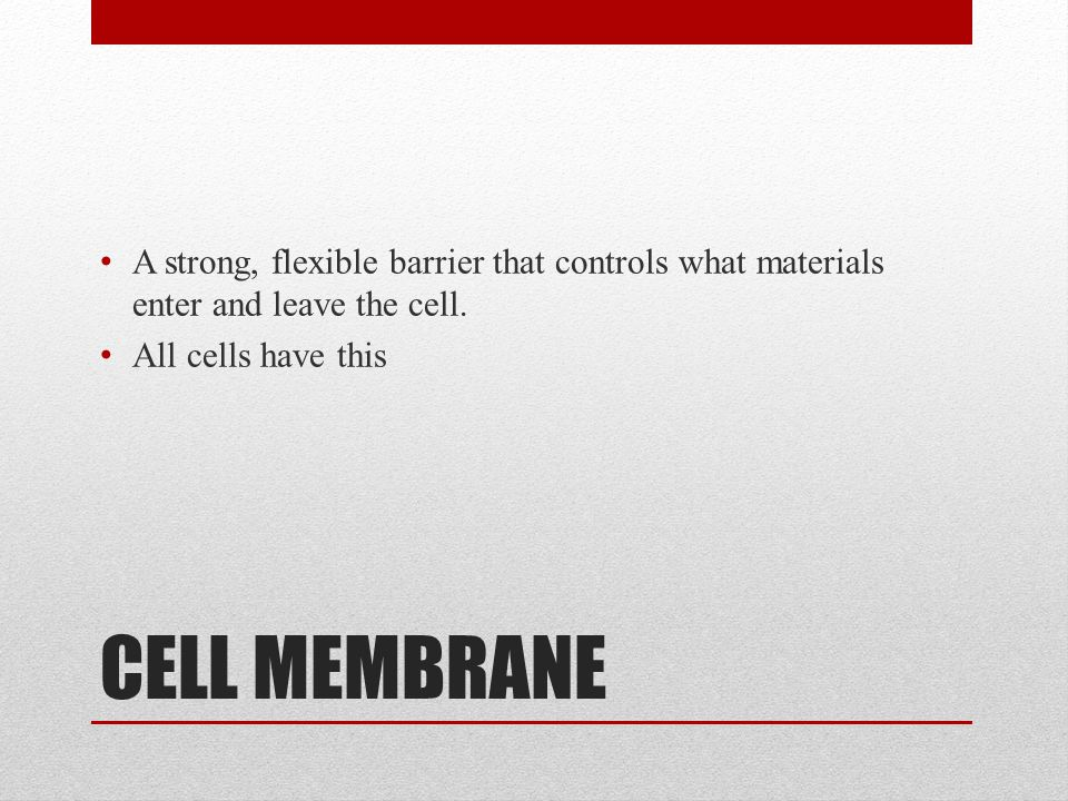 A strong, flexible barrier that controls what materials enter and leave the cell.