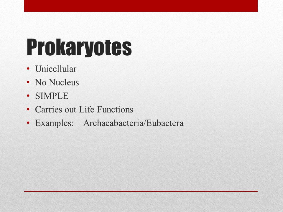 Prokaryotes Unicellular No Nucleus SIMPLE Carries out Life Functions