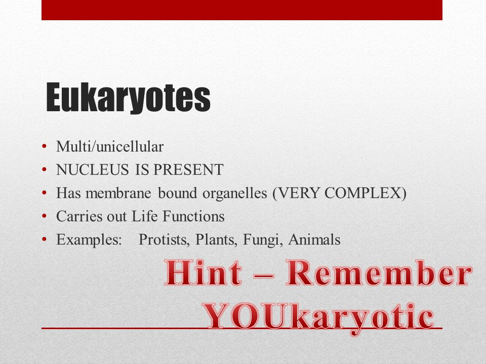 Hint – Remember YOUkaryotic