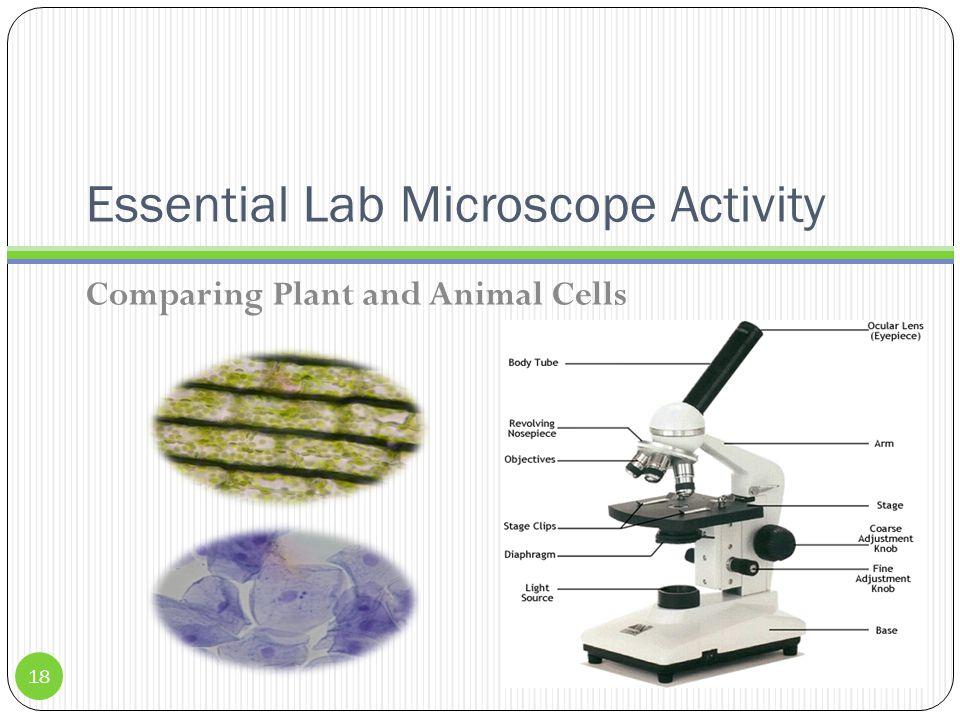 Essential Lab Microscope Activity