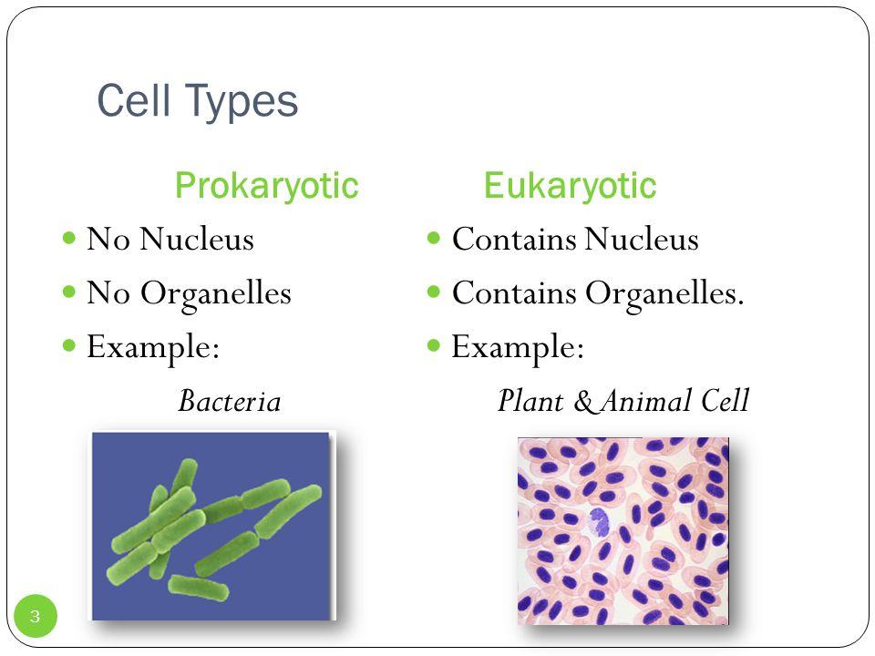 Cell Types Prokaryotic Eukaryotic No Nucleus No Organelles Example: