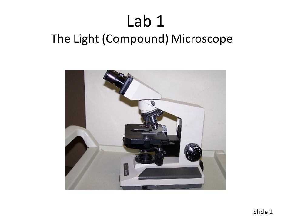 The Light (Compound) Microscope