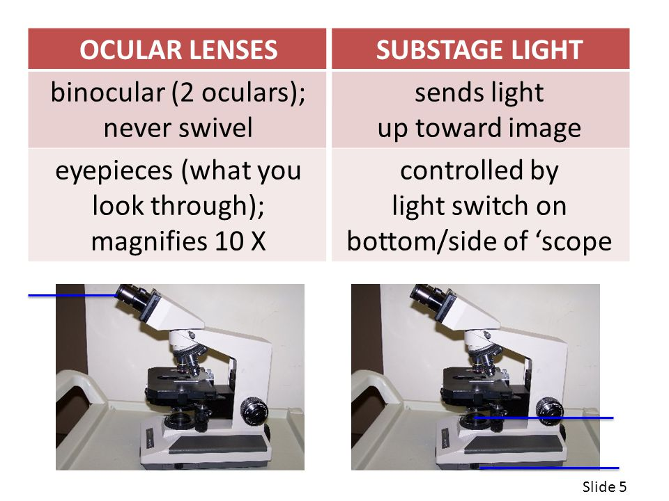 eyepieces (what you look through); magnifies 10 X