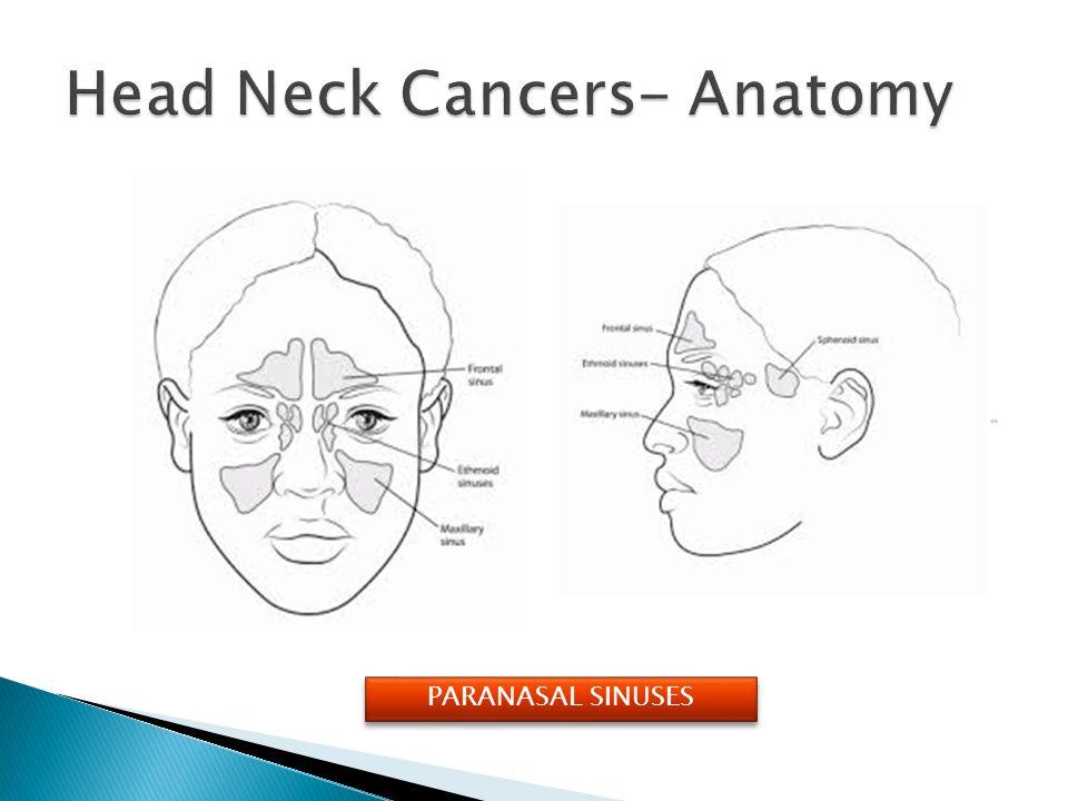 Head Neck Cancers- Anatomy