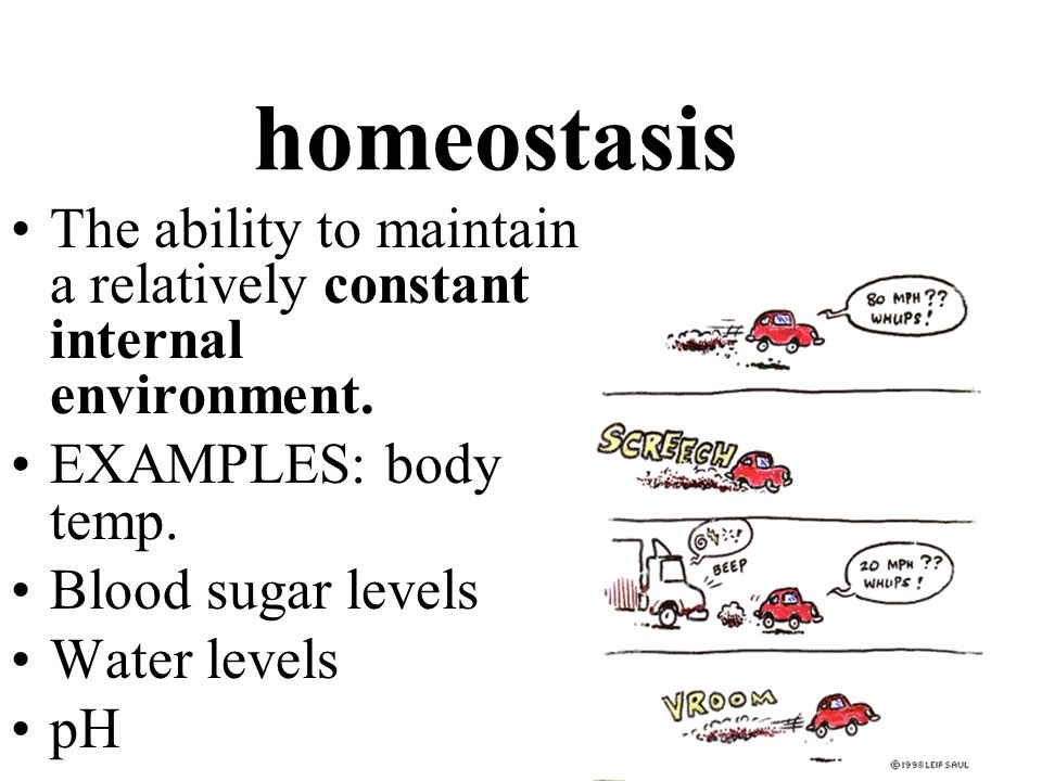 homeostasis The ability to maintain a relatively constant internal environment. EXAMPLES: body temp.