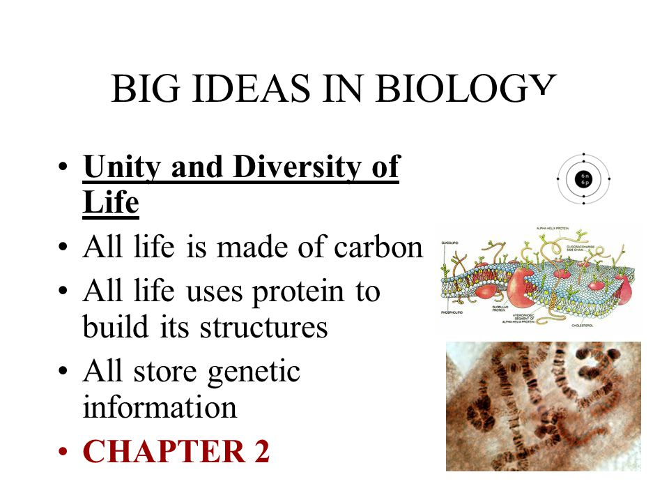 BIG IDEAS IN BIOLOGY Unity and Diversity of Life