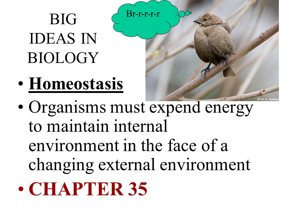 Br-r-r-r-r BIG IDEAS IN BIOLOGY. Homeostasis.
