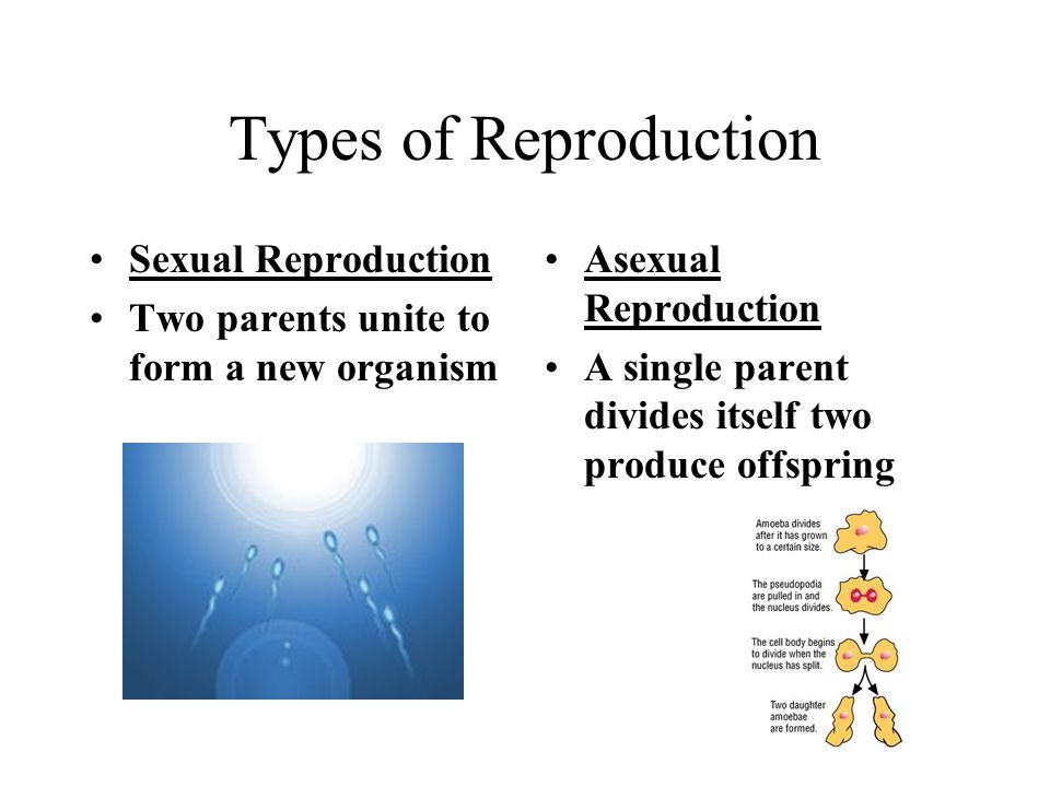 Types of Reproduction Sexual Reproduction
