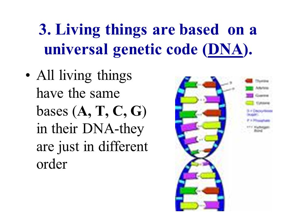 3. Living things are based on a universal genetic code (DNA).