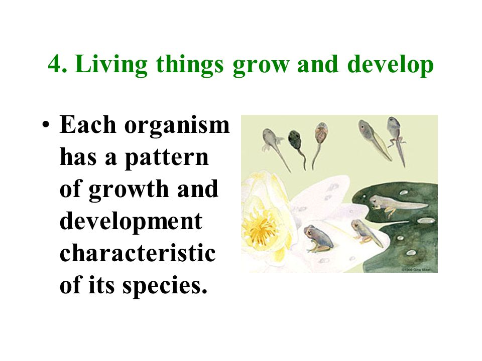 4. Living things grow and develop