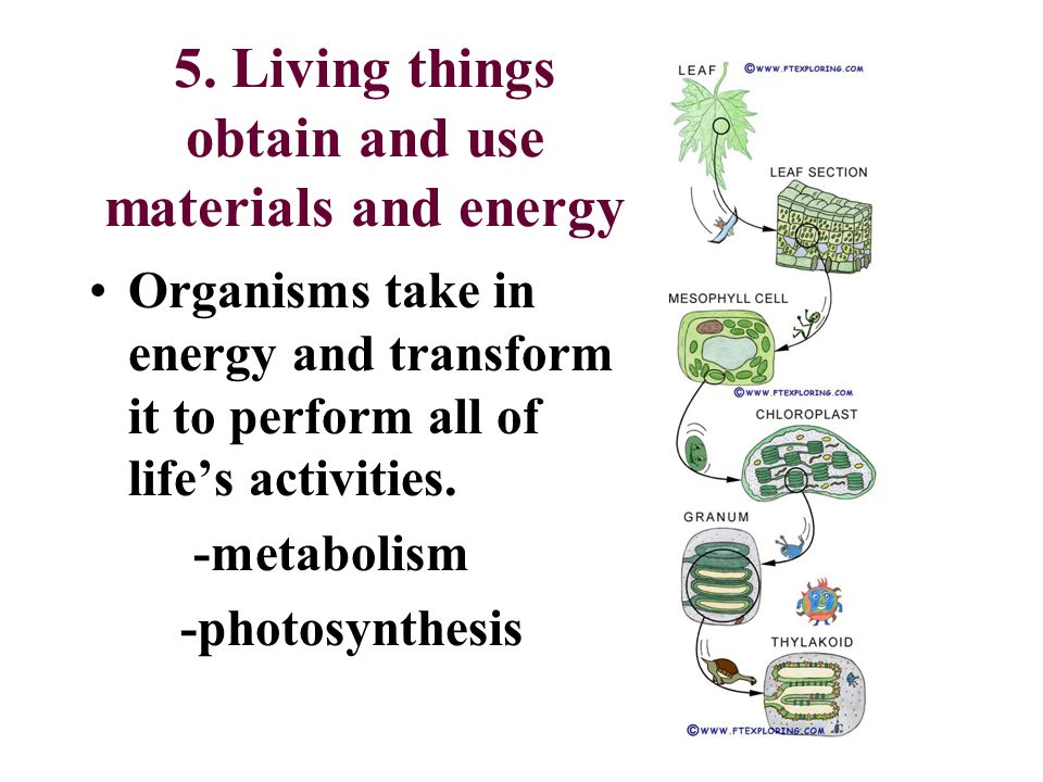 5. Living things obtain and use materials and energy