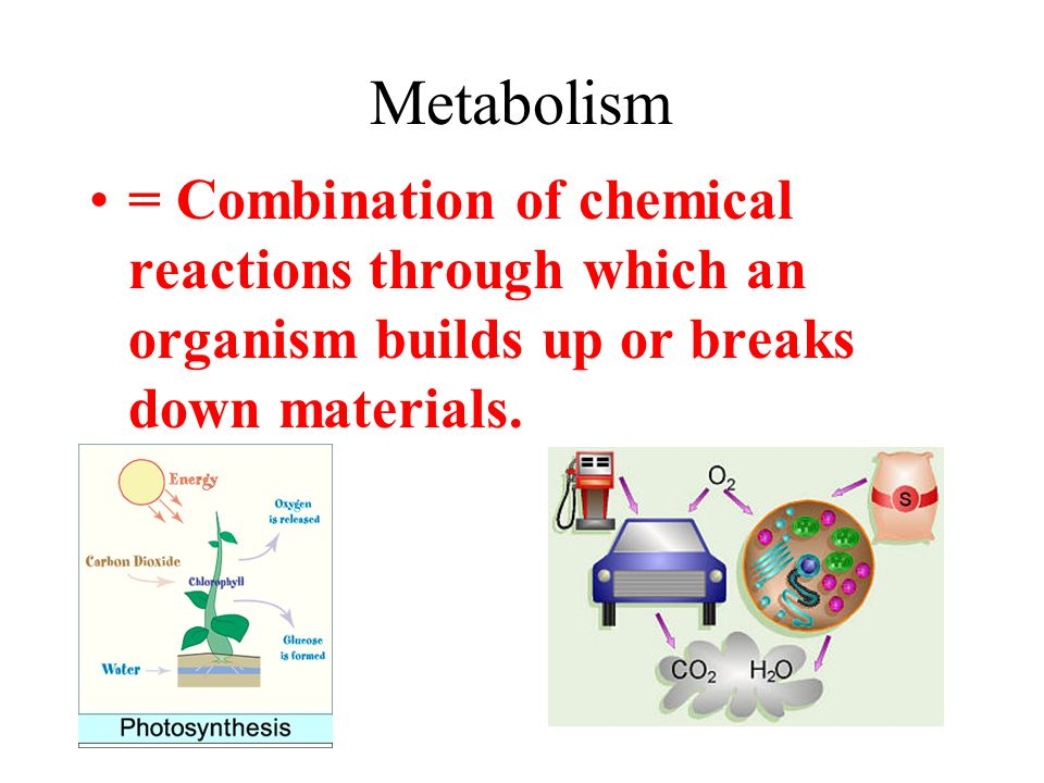 Metabolism = Combination of chemical reactions through which an organism builds up or breaks down materials.