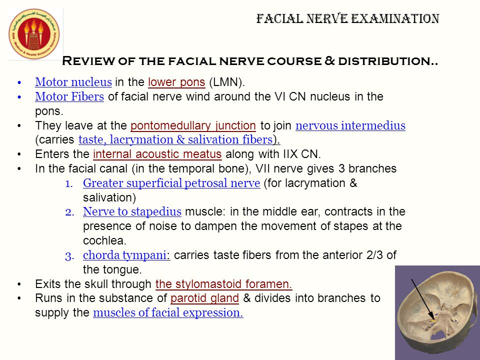 Review of the facial nerve course & distribution..
