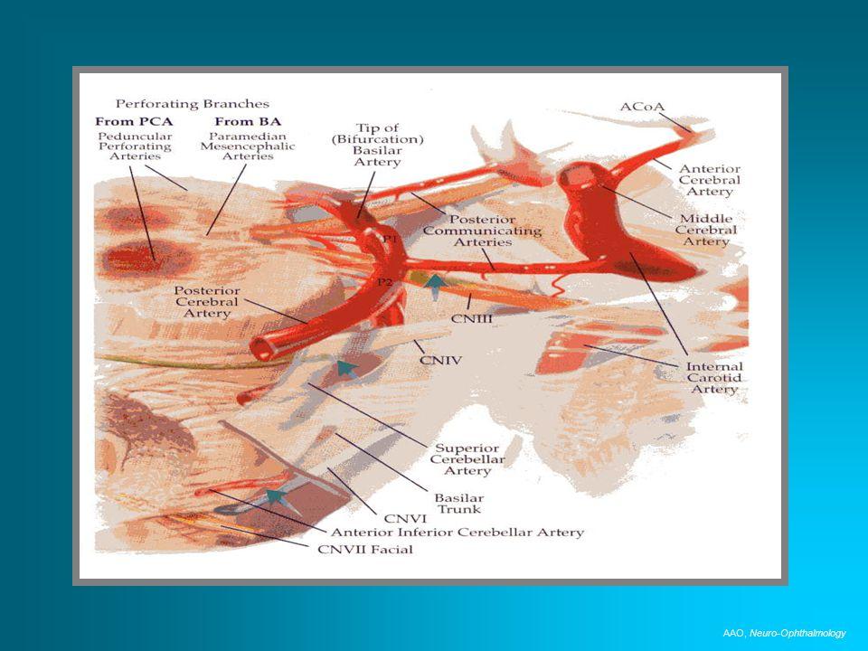AAO, Neuro-Ophthalmology