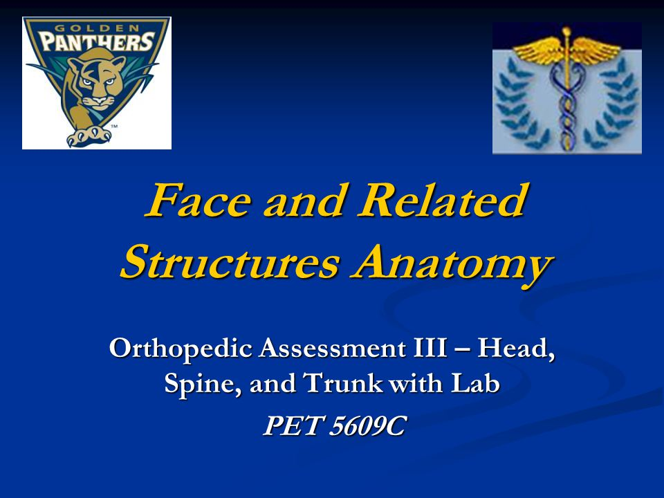 Face and Related Structures Anatomy