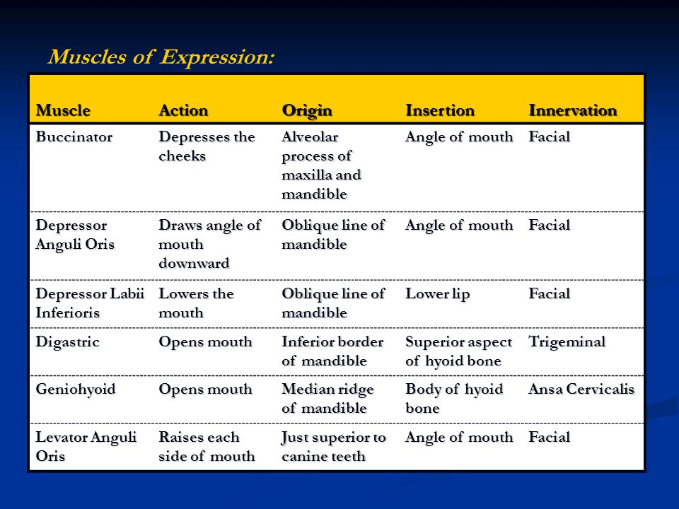 Muscles of Expression: