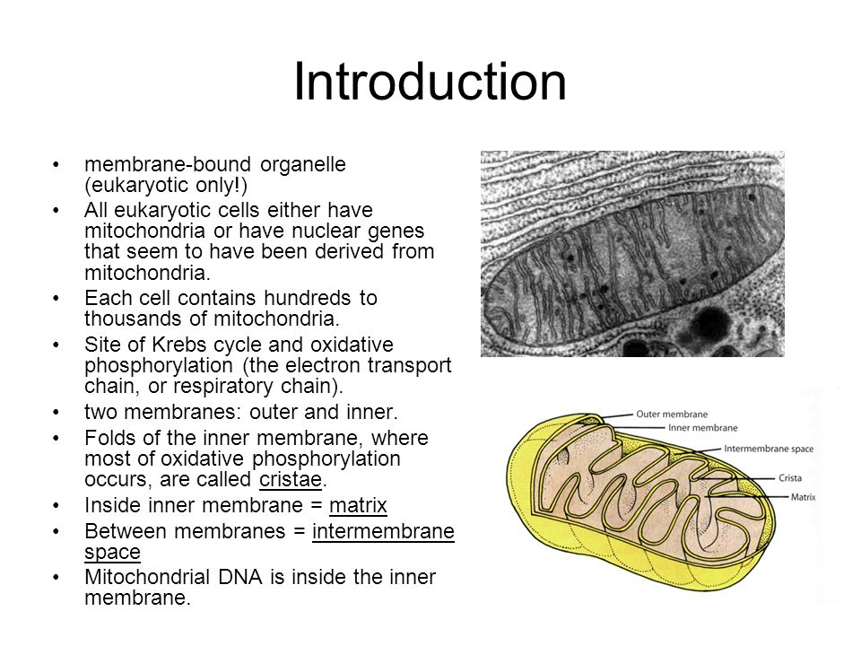 Introduction membrane-bound organelle (eukaryotic only!)