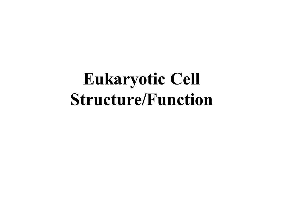 Eukaryotic Cell Structure/Function
