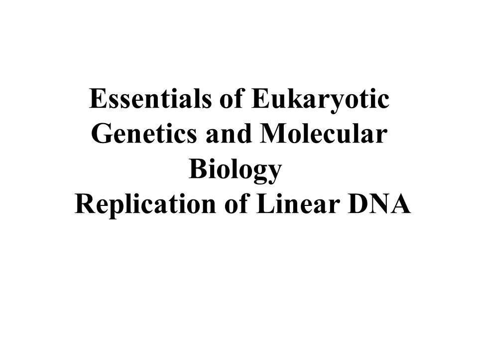 Essentials of Eukaryotic Genetics and Molecular Biology Replication of Linear DNA