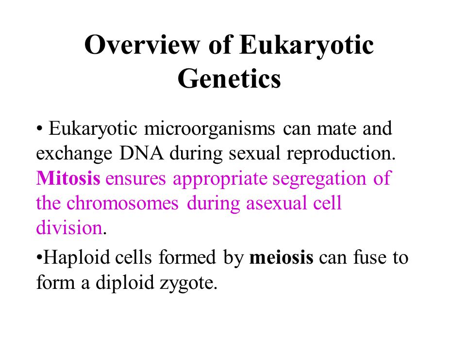 Overview of Eukaryotic Genetics