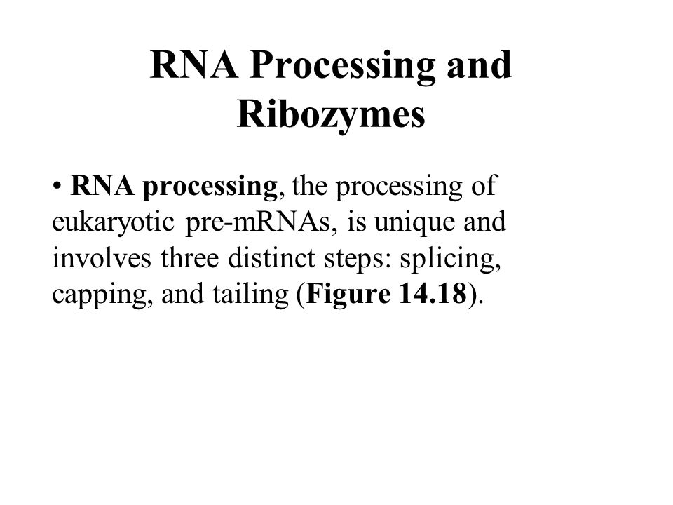 RNA Processing and Ribozymes