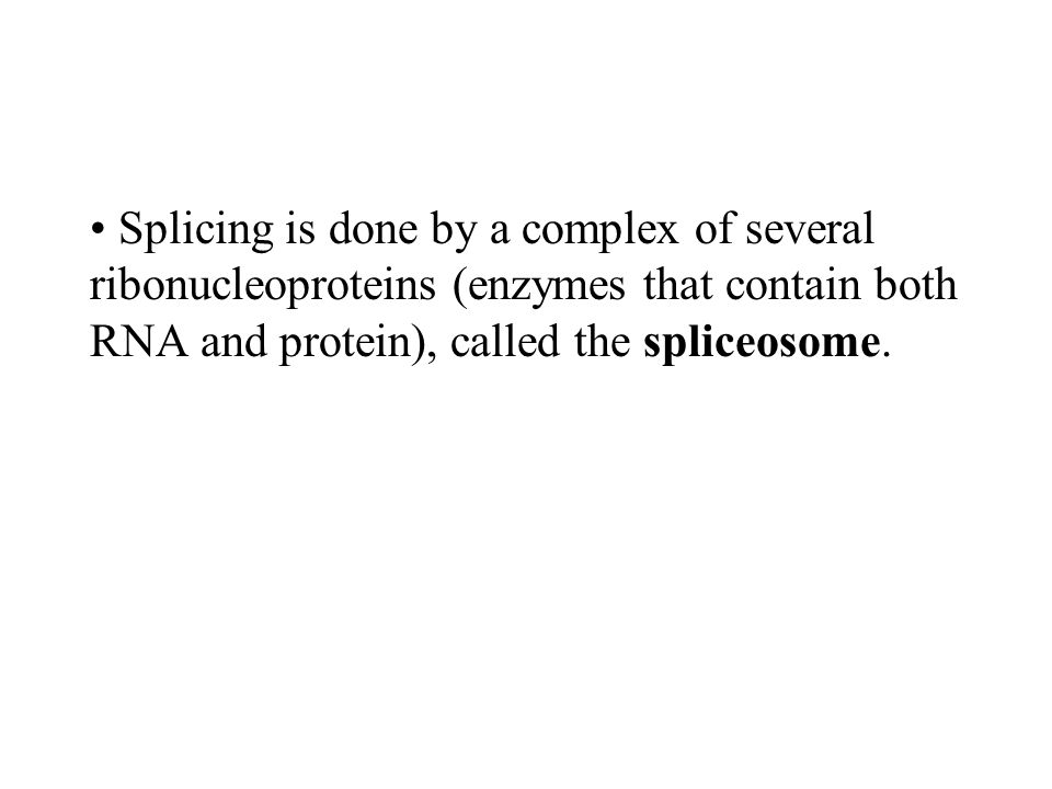 Splicing is done by a complex of several ribonucleoproteins (enzymes that contain both RNA and protein), called the spliceosome.