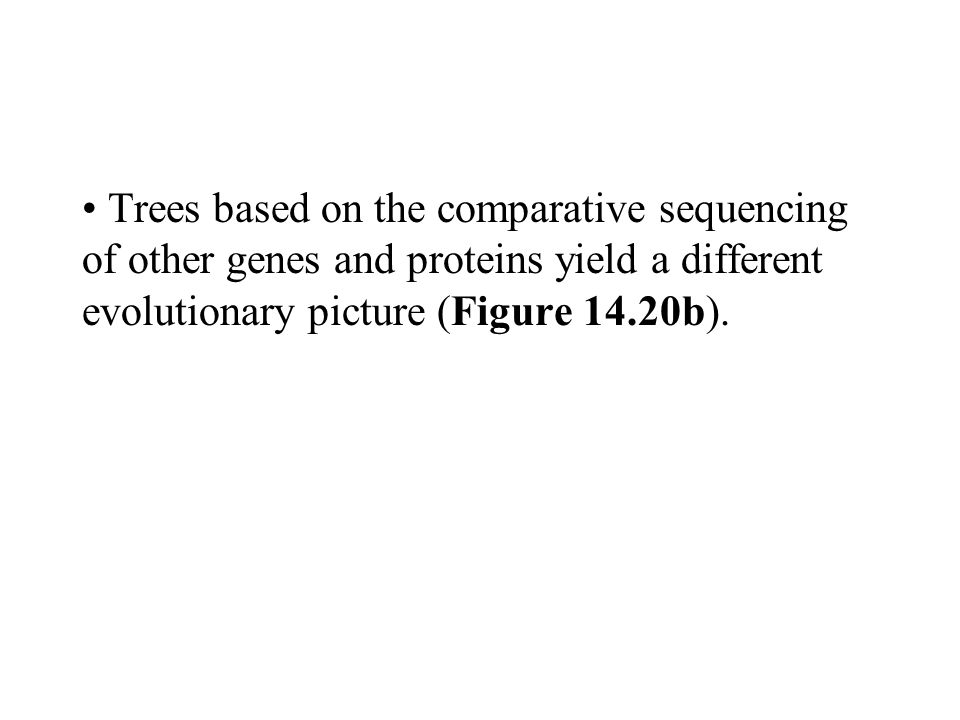 Trees based on the comparative sequencing of other genes and proteins yield a different evolutionary picture (Figure 14.20b).